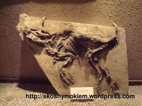 shanghai_natural_history_museum_上海自然博物馆_exposition_03