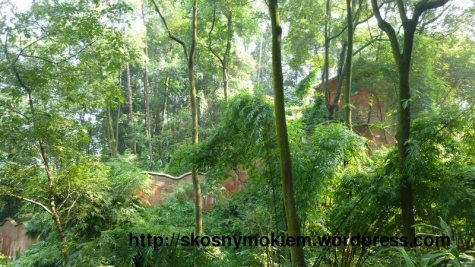 09_乐山大佛景点环境_giant_Leshan_Buddha_inside_scenic_spot_03
