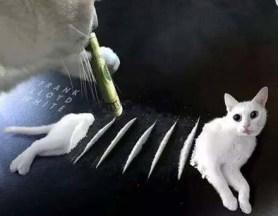 Cat_sniffing_China_source_fanjian_net